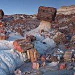 Hal yang Dapat Dilakukan Petrified Forest National Park